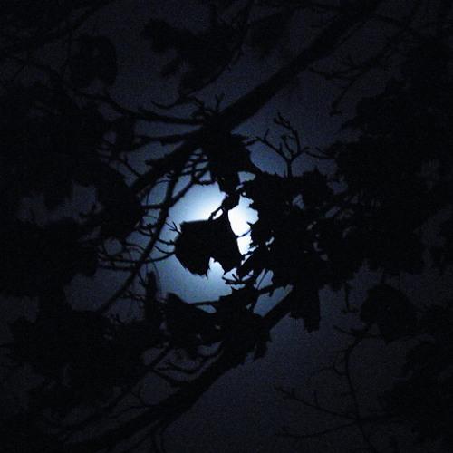 --- II. Nachtmusik