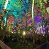 TAZ - Part I. /// Fusion Festival ////