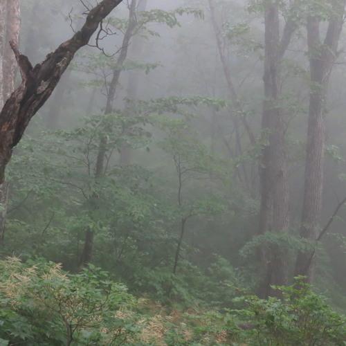 Mt. Seorak woodpecker01