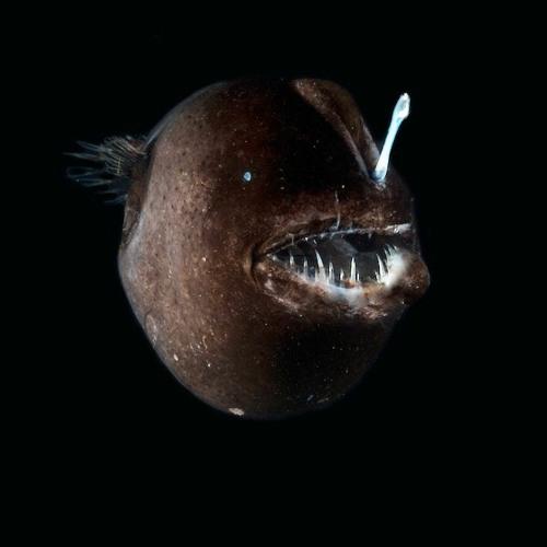 16 cm 75 g salmone e ippoglosso. Fischngghost/® 2 pezzi RoachyOne vallo Pesce di gomma per la pesca su luccio merluzzo luccioperca