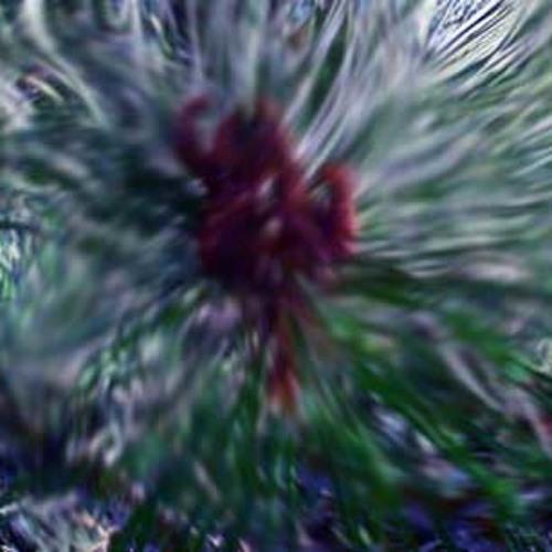 Pine (Oceansize Cover)