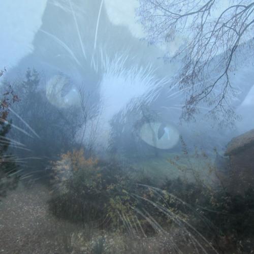 Dead Cats Soul