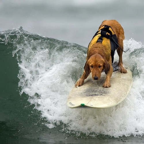 Black And Blue Surf Dawg