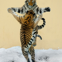 It Takes Two Tigers (J5k vs Pecoe vs Rob Bass Mashup)