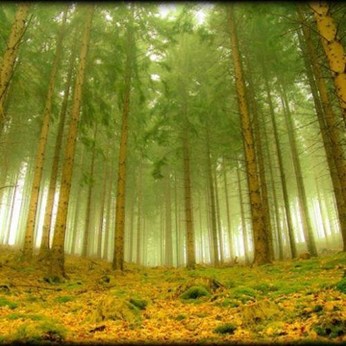 BDZ - Forest Spirit