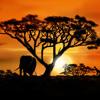 Wishing For Rain In Africa - InF3Rum & Shamira