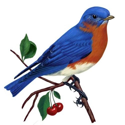 The Bluebird is Blue