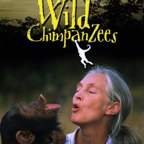 JANE GOODALL'S WILD CHIMPANZEES: Mother Africa