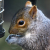 How Do You Keep Squirrels Away From The Bird Feeder?