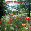 Sirian Dog Days by Steph Sweet and The Weighty Tree