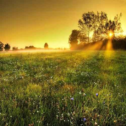 531 - Field Of Dreams