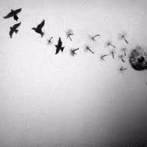 Imagine This - Freedom -Feat. Che Fu  #Gaza