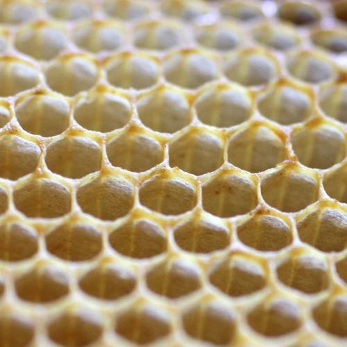 A la découverte des ruches de la Maison de la Radio