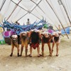 DJ Mago (Amazon Vibes) - Set Full On 1º/2014