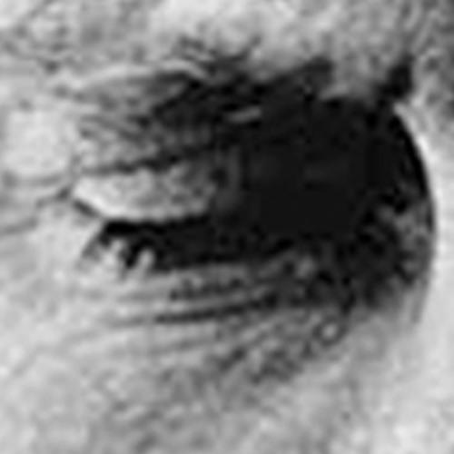 Everything, Nothing, Harvey Keitel