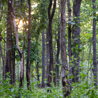 Thailand deciduous forest
