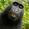 Chimpanzee Sound