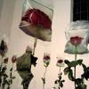 Didem Madak - Çiçekli şiirler Yazmak istiyorum Bayım Yorum - Eser Gökay mp3