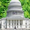 The Cannabis Report - DC Voters Could Legalize It mp3