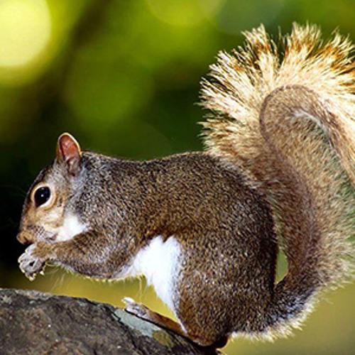 Polyslax - Live Like A Squirrel [NSM Remix]