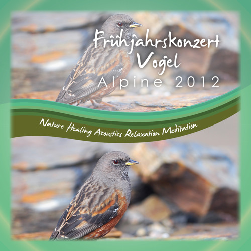 Frühjahrskonzert Vögel Alp 1 Naturgeräusche Tonaufnahmen Audiophile