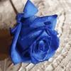Una Rosa Blu-Michele Zarrillo-cover Salvo