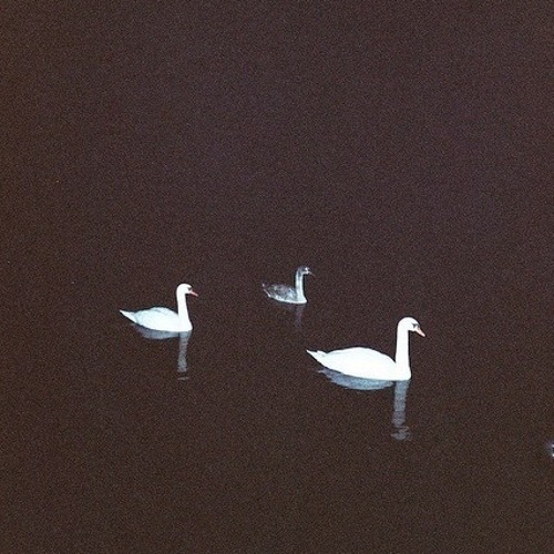 Handbook - Swans (It's Up To You)