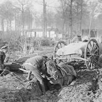 They Had No Choice - The Irish Horse at War