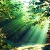 El Sonido De La Naturaleza..los Pajaros Música De Relajación RELAX MUSIC (Low)
