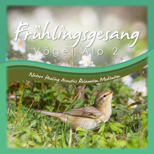 Frühjahrskonzert Vögel Alp 2 Naturgeräusche Nature Sounds Meditation Relaxation healing acoustics