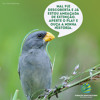 Nova espécie de ave é descoberta no Sul e já está ameaçada de extinção