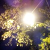 Free Download Midnight Instrumental at Freddy Beach Mp3