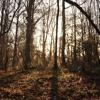 Van Diemansland (Welsh woodland dome) - Sam Lee
