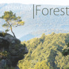 relaxdaily - Forest : must see the YouTube version!