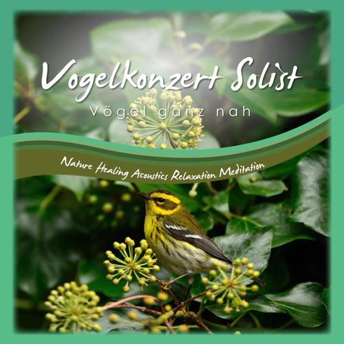 Frühjahrskonzert der Vögel Solist 1 - Vögel ganz nah Naturgeräusche Nature Sounds