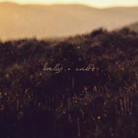 Brolly - Wolfe