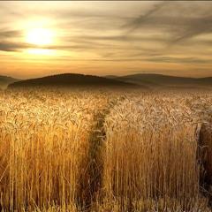 Fields Of Gold  (Sting) - New Improvisation