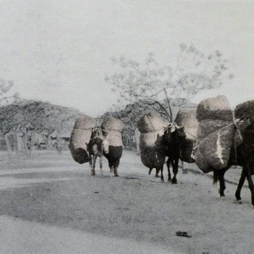 Migrant Workers in Ottoman Anatolia | Chris Gratien