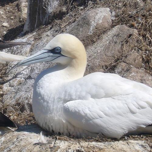 Birds Of The Great Saltee - Track7of16
