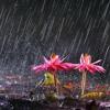 Yağmurun sesine bak, aşka davet ediyor… mp3