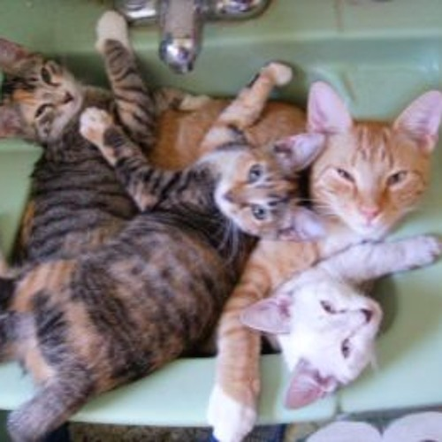 Ten Cats Playing With Several Octaves In One Third Of A Sink