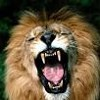 LION IN MY POCKET (Confidential)