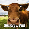 Cow Juice - Beatsuite.com Music Library
