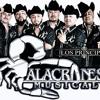 El Papa Del Diablo--Alacranes Musical ..2014