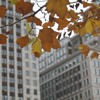 Falling temperatures could be the first sign of autumn
