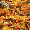 Lesovsky am Piano - Fenster zum Herbst - Instrumental