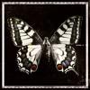 Danny Darko - Butterfly (NATZure Remix) feat. Jova Radevska