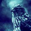 Eagle - Original Mix