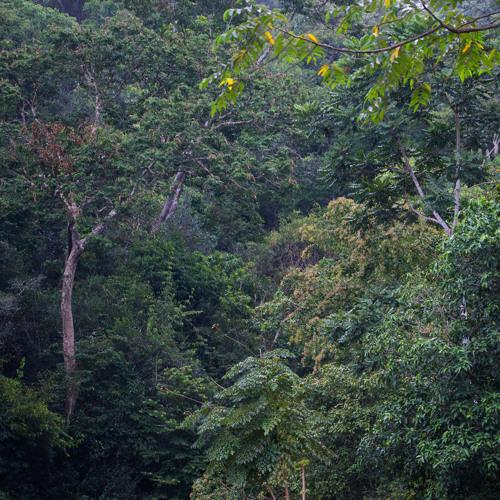 Thailand's Tropical Rainforest - Kaeng Krachan National Park