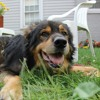 Old Dog Jett